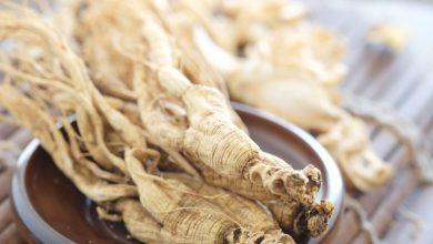 Photo of Les différentes variétés du Ginseng