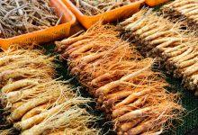 Photo of Les différences entre le ginseng rouge et le ginseng blanc